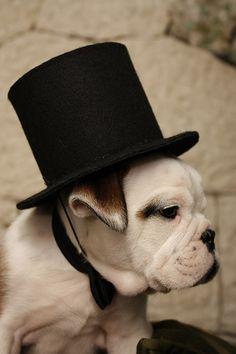 Dog / Top Hat