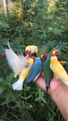 Macaws Boxer Briefs Mens Underwear Pack Seamless Comfort Soft