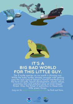 https://www.behance.net/gallery/12775057/Poster-Raising-awareness-about-turtle-extinction