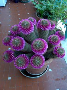 Corona di fiori su corona di spine