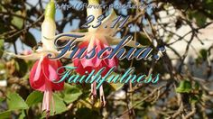 Your faithfulness makes you trustworthy to God. — Edwin Louis Cole — #FlorasDial #Floriology #Flower #Meaning #Fuschia #Faithfulness #FlorasDial1123