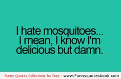 Why I hate Mosquitoes - Funny Quotes
