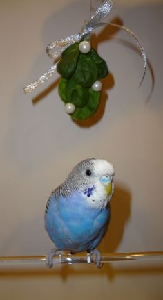 Reminds me of Toby Joe.  He was only in his cage at night.  Talked all day!!  Funny bird.