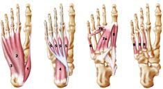 Voetklachten oplossen met het trainen van je voetspieren