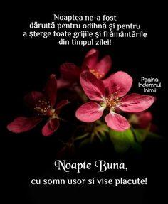 Happy Evening, Spiritual Quotes, Girl Boss, Good Night, Spirituality, Beauty, Spirit Quotes, Nighty Night, Spirituality Quotes