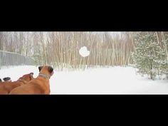 Keshet Kennels/Rescue - A Winter Moment
