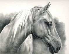 carousel horse head drawings in pencil | Horse-in-pencil-blog2.jpg