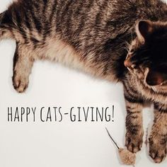 Happy Catsgiving! The cafe is closed today but we will be open as usual tomorrow for Black Furriday! And remember: This month, a purchase of $25 in cat swag gets you $5 entry to the cat cafe! #blackfriday #crumbsandwhiskers