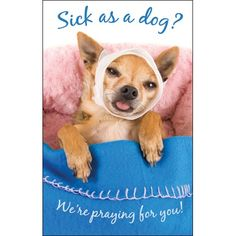 Sick as a Dog Scripture quote post cards