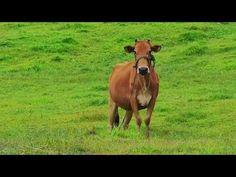 Road Trip @ Bo Kleua Thailand Travel, Road Trip, Horses, Artist, Animals, Animales, Animaux, Road Trips, Artists