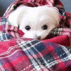 Blanket scarf season #tbt