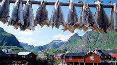 Stockfish from Lofoten island, Norway