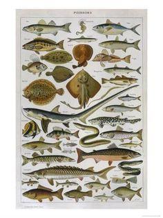 Giclee Print: Animal Charts Art Print : 24x18in