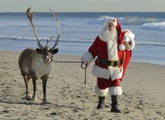 Yes, you can lead a reindeer to water - The Orange County Register Christmas Quotes, Christmas Love, All Things Christmas, Merry Christmas, Reindeer Names, Santa And Reindeer, Florida Holiday, Deck The Halls, Huntington Beach