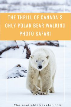 The Thrill of Canada's only Polar Bear Walking Photo #Tour _ #safari _ #Photography _ #Travel _ #Wildlife _ #WildlifePhotography _ #TravelPhotography (1)