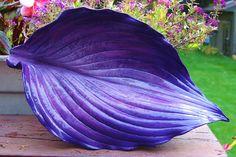 Purple Hasta concrete leaf casting. $24.00, via Etsy.