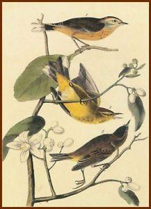 birds jj audubon - Google Search