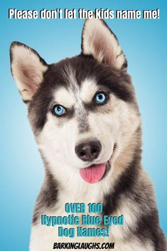 Are you looking for some cool blue eyed dog names? We have over 100 Blue Eyed dog names with the meanings! Pet Names For Dogs, Female Dog Names, Best Dog Names, Puppy Names, Blue Eyed Dog Names, Blue Names, Funny Boy Names, Kid Names, Silly Dogs