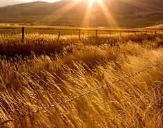 amber waves by dharma communications, via Flickr