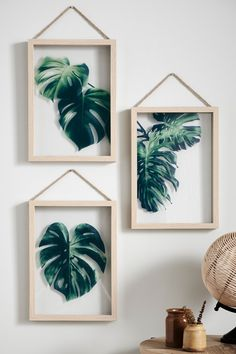 Buy Set of 3 Cheese Plant Floating Frames from the Next UK online shop Chinese Money Plant, Cheese Plant, Plant Wall, Floating Frame, Bedroom Wall, Bedroom Ideas, Nursery Ideas, Bedroom Decor, Faux Flowers