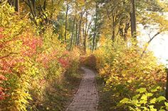 Did you know that there is a walking path that encircles Geneva Lake along the shoreline?  Plan your 21-mile hike today!