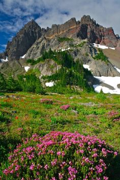 Three Fingered Jack and Mountain Heather in the Oregon Cascades