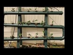 How to grow Strawberries in Hydroponics, Tips #1 2013