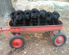 want all of them!!!!