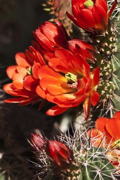 Love that spring makes the desert bloom!  (Image by Dr. Joseph T. McGinn) -- ARIZONA'S SONORAN DESERT REGION, especially SAGUARO NATIONAL PARK, is a delight.  Doubleclick the image to hop into a travel article on National Park hot spots -- http://www.examiner.com/travel-in-national/springtime-delights-america-s-national-parks