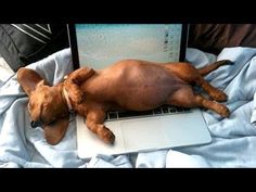 Cats and dogs sleeping in funny positions - Funny animal compilation - http://www.doggietalent.com/posts/cats-and-dogs-sleeping-in-funny-positions-funny-animal-compilation/