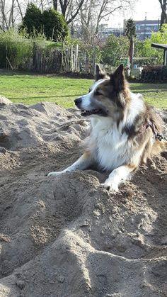 Hunde Foto: Martina und Sandy - Sandy unser Sonnenschein Hier Dein Bild hochladen: http://ichliebehunde.com/hund-des-tages  #hund #hunde #hundebild #hundebilder #dog #dogs #dogfun  #dogpic #dogpictures