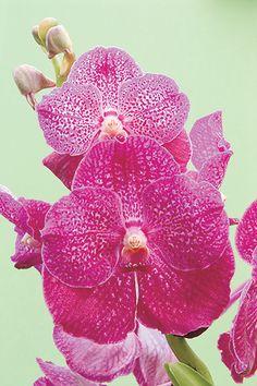 10 dicas para cuidar melhor das suas orquídeas