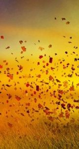 Top 20 Wallpapers Leaves On iphone