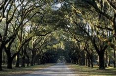 Wisnlow Plantation (SavannahGa)