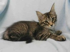 We have lots of kittens available for adoption as TAS South (140 Princes' Blvd). Like Muffin!