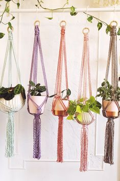 Indecisive? No worries. You can hang your plants in every color of the rainbow.