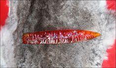 Knappin Jack-knife blades stone knives flintknapped flintknapper custom knife blades