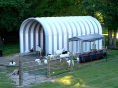 The SteelMaster buildings are there to provide the goats with shelter from wind and rain, a necessity for these animals that are prone to respiratory illness and as a rule, hate being wet.