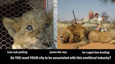 """Petition · Deny """"George Wildlife Park"""" the opportunity of establishing any cub-petting facilities in our town as this seemingly innocent industry is the basis for a much darker side - that of canned hunting. · Change.org (comment from previous pinner)"""