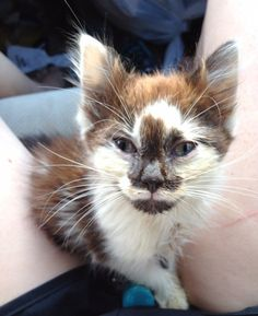 Woman Refuses to Give Up on Kitten Barely Recognizable, His Transformation in These Amazing Photos!