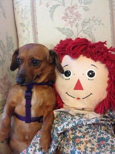 Doxie Love Pic on Pinterest https://www.facebook.com/photo.php?fbid=10152058464723296&set=a.421933603295.211214.347761993295&type=1&theater