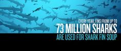 ------Stop Shark Finning------The world's population of Sharks has decreased 50% in the past 15 year. And the main reason behind this is Shark Finning. ------Repin & Like------To Spread Awarness  NOT  COOL