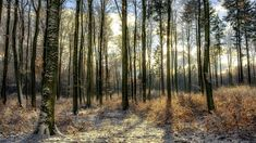 Autumn Forest, Flower Photos, Trees To Plant, Most Beautiful, Flora, Country Roads, Herbs, World, Plants