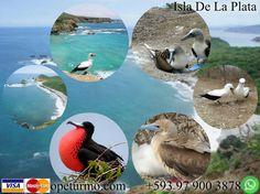 Tour Isla de la Plata Machalilla Ecuador Disfruta de este tour con toda tu familia y amigos , en un recorrido por la isla observando la variendad de especies que esta nos ofrece , llamada tambien la pequeñas Galapagps por parecida flora y fauna.