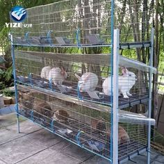 Rabbit Cages Outdoor, Outdoor Rabbit Hutch, Rabbit Farm, Wooden Rabbit, Rabbit Hutch Plans, Rabbit Hutches, Meat Rabbits, Raising Rabbits, Backyard Farming