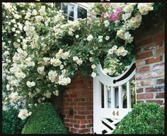 The Sweet Southern Noisette Rose
