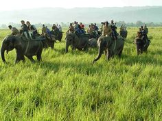 Kaziranga Wildlife Tour - Elandholidays offers the information about the 07 Nights / 08 Days wildlife in north east.  Book this tour here http://tinyurl.com/pwvoy94