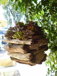 Hanging driftwood baskets or pots!