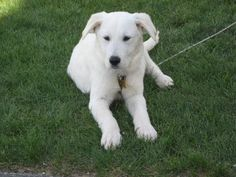 Hi my name is Miles. I'm available for adoption through POET animal rescue. We're on facebook! www.facebook.com/POETAnimalRescue