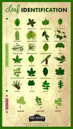 Leaf And Tree Identification #leaf #trees #Camping101